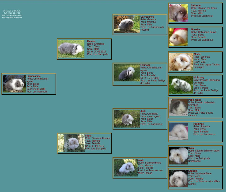 Hippocampepedigree